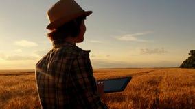 Granjero de la chica joven en campo de trigo en fondo de la puesta del sol la muchacha utiliza una tableta, planes para cosechar imagen de archivo libre de regalías