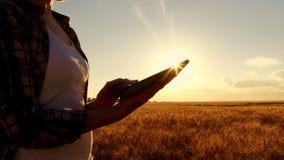 Granjero de la muchacha en camisa de tela escocesa en campo de trigo en fondo de la puesta del sol La muchacha utiliza una tablet fotos de archivo