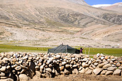 Granjero de la mujer del pueblo de Korzok, Ladakh, Jammu y Cachemira Fotos de archivo