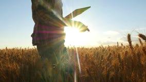 Granjero de la mujer joven en campo de trigo en fondo de la puesta del sol Una muchacha despluma puntos del trigo, después utiliz imágenes de archivo libres de regalías