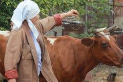 Granjero de la mujer que alimenta una vaca Oncept del  de Ñ de: cría fotografía de archivo libre de regalías