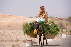 Granjero de la mujer que se sienta y que viaja en su burro, Marruecos Imágenes de archivo libres de regalías