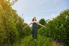 Granjero de la mujer que trabaja en jardín de la fruta El inspector del biólogo examina arbustos de zarzamora imagen de archivo