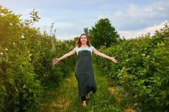 Granjero de la mujer que trabaja en jardín de la fruta El inspector del biólogo examina arbustos de zarzamora fotografía de archivo libre de regalías