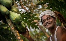 Granjero de la papaya en Kerala fotografía de archivo