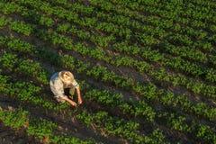 Granjero de la soja en el campo, visión aérea fotografía de archivo