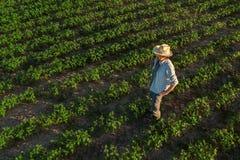 Granjero de la soja en el campo, visión aérea foto de archivo libre de regalías