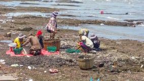 Granjero de las almejas del mar de la playa de Keb fotografía de archivo