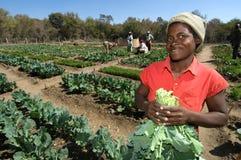Granjero de sexo femenino en Zimbabwe Imagen de archivo