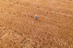 Granjero de trigo con el control remoto del abejón en campo foto de archivo