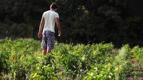 Granjero de Yong que camina en el campo de la granja orgánica metrajes