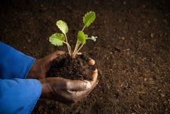 Granjero del afroamericano con la nueva planta Fotografía de archivo