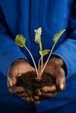 Granjero del afroamericano con la nueva planta Fotos de archivo