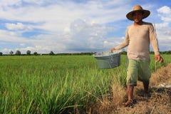 Granjero 2016 del arroz Imagenes de archivo