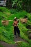 Granjero del Balinese con una cesta que trabaja en terrazas verdes del arroz Foto de archivo libre de regalías