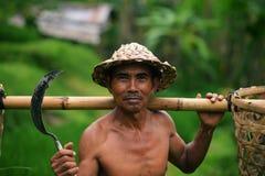 Granjero del Balinese con una cesta que trabaja en terrazas verdes del arroz Fotos de archivo