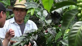 Granjero del café, trabajador, plantación, naturaleza