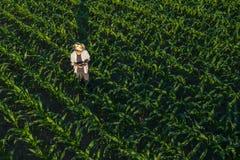 Granjero del maíz con el control remoto del abejón en campo fotografía de archivo