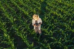 Granjero del maíz con el control remoto del abejón en campo imágenes de archivo libres de regalías