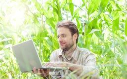 Granjero delante del campo de maíz que trabaja en el ordenador portátil Fotografía de archivo libre de regalías