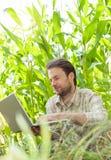 Granjero delante del campo de maíz que trabaja en el ordenador portátil Fotos de archivo libres de regalías