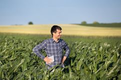 Granjero en campo de maíz fotos de archivo libres de regalías