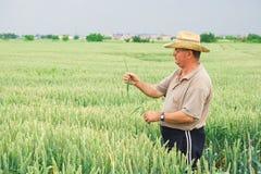 Granjero en campo de trigo Fotografía de archivo libre de regalías