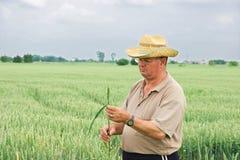 Granjero en campo de trigo Fotos de archivo libres de regalías