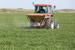 Granjero en campo de trigo de la fertilización del tractor Foto de archivo libre de regalías