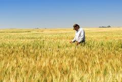 Granjero en campo de trigo de trigo duro Foto de archivo libre de regalías