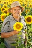 granjero en campo del girasol Imagen de archivo libre de regalías