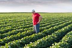 Granjero en campos de la soja Imágenes de archivo libres de regalías