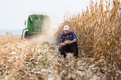 Granjero en campos de maíz imagen de archivo libre de regalías