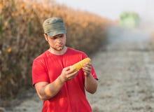 Granjero en campos de maíz Fotos de archivo libres de regalías