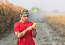 Granjero en campos de maíz Fotos de archivo