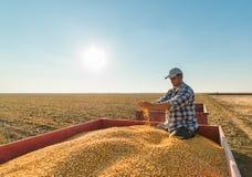 Granjero en campos de maíz Foto de archivo libre de regalías