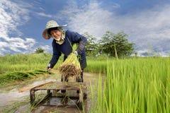 Granjero en campos verdes Fotos de archivo