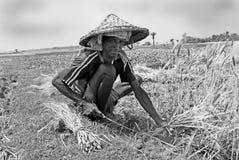 Granjero en el campo. Foto de archivo