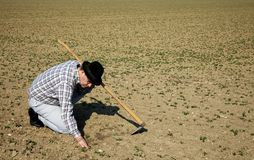 Granjero en el campo con las plántulas  Fotografía de archivo