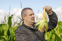 Granjero en el campo de maíz Fotos de archivo libres de regalías
