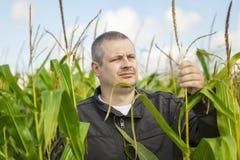 Granjero en el campo de maíz Foto de archivo libre de regalías
