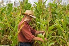 Granjero en el campo del maíz Imagenes de archivo