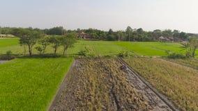 Granjero en el campo Indonesia del arroz almacen de metraje de vídeo