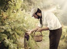 Granjero en el viñedo Imágenes de archivo libres de regalías
