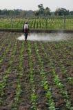 Granjero en granja del tabaco Imagenes de archivo