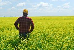 Granjero en la cosecha de Canola Fotografía de archivo