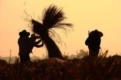 Granjero en norteño de Tailandia Imagen de archivo