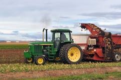Granjero en tractor verde que cava y que cosecha las remolachas fotos de archivo