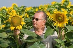 Granjero en un campo de flor del sol Fotografía de archivo