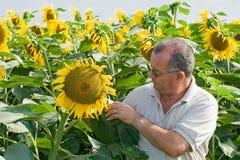 Granjero en un campo de flor del sol Foto de archivo